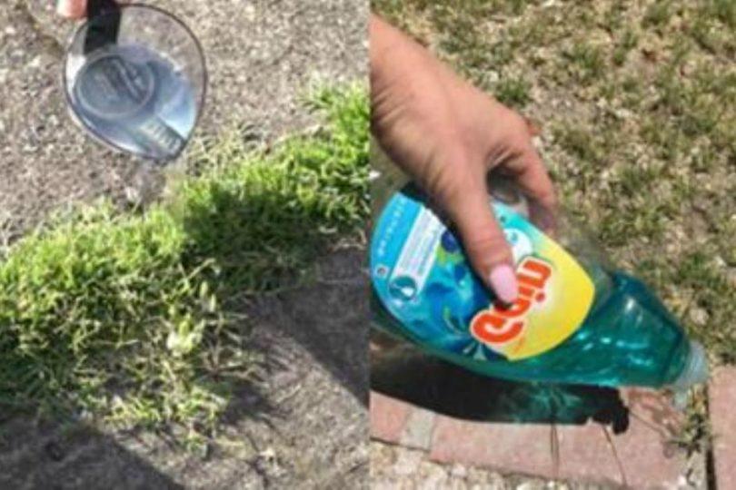 Садовник показывает простой трюк, который поможет избавиться от сорняков — дешево и эффективно