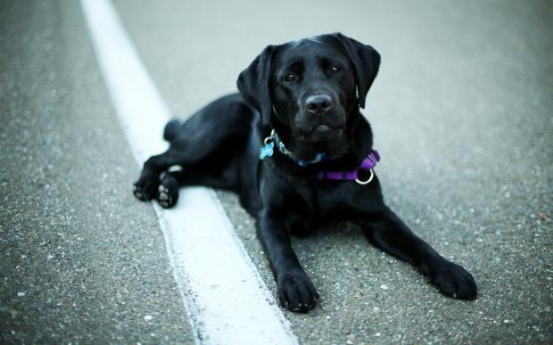 Волшебство не имеет границ - собака вернулась в семью через 10 лет после исчезновения