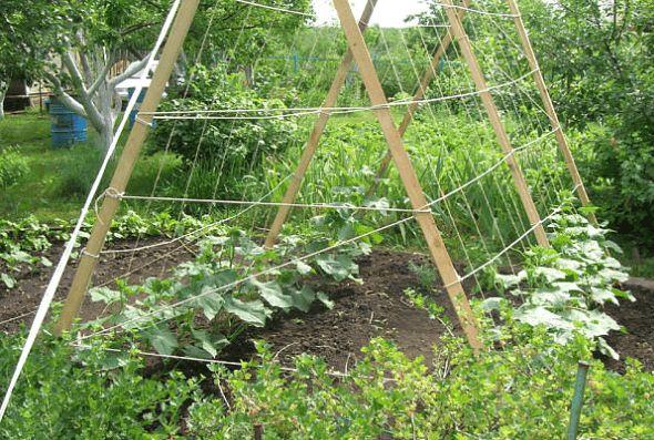 Как сделать шпалеры для огурцов и помидоров