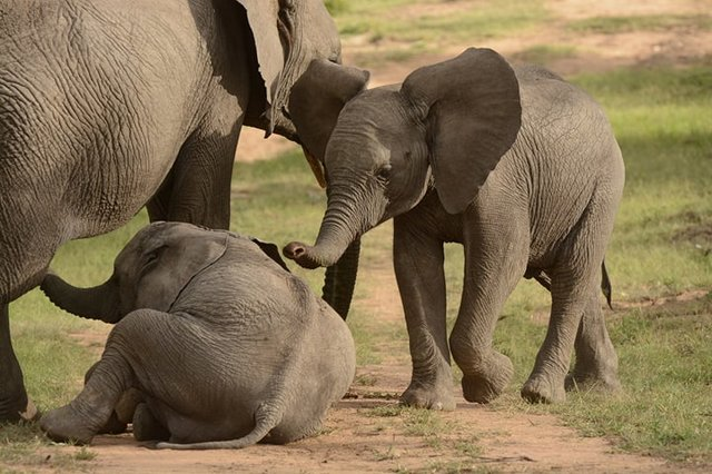 11-elephant-mother-and-her-grieving-children