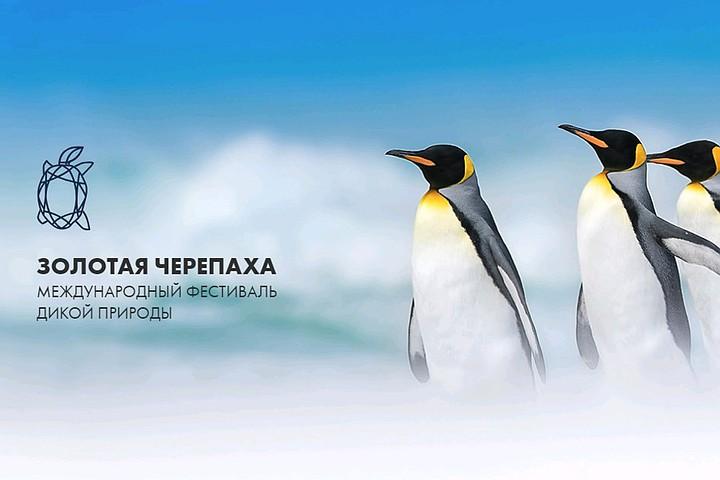«Комсомолка» наградила победителей «Золотой черепахи»