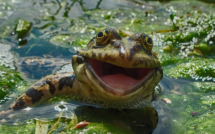 Фотографии животных с конкурса Comedy Wildlife Photography Awards