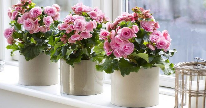 Кашпо для цветов - какие вар…