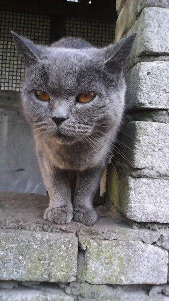 Облезлая кошка с противным характером на Дом не рассчитывала… Но кое-кто её приютил