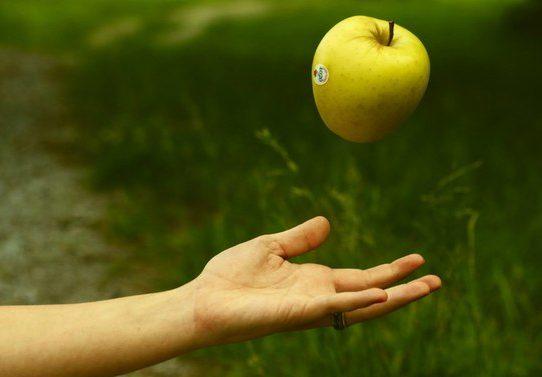 Падающее в руки яблоко…