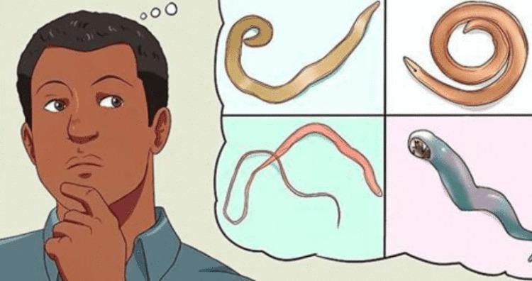 4 продукта которые быстро устранят из вашего кишечника паразитов