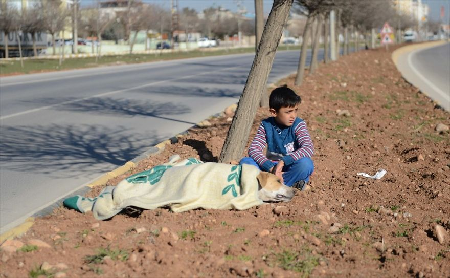 Refugee Boy Refuses To Leave Injured Stray Dog Until Help Arrives