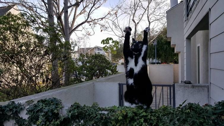 25 смешных котов, которые наотрез отказываются вести себя как нормальные животные кошки, приколы, прикольные фото животных, смешные кошки