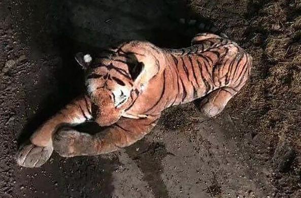 Шотландец испугался плюшевого тигра в коровнике и вызвал полицию