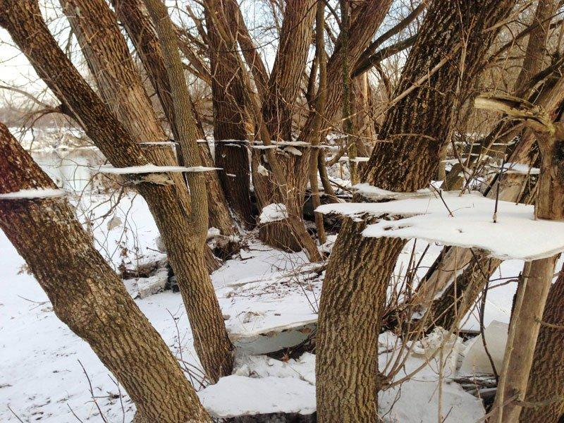 ice-and-snow-on-tree-after-flood-trippy-effect