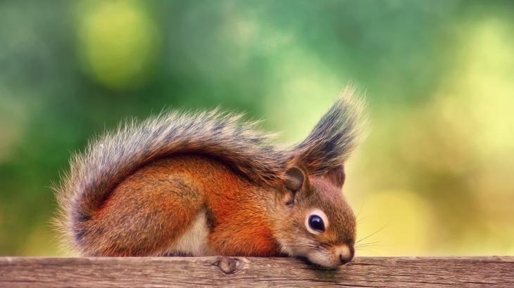 Умиляющее многообразие картинок животных