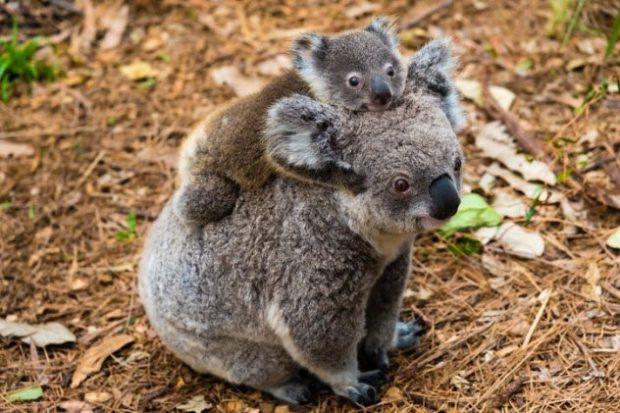 10 безобидных зверьков, которые на самом деле смертельно опасны