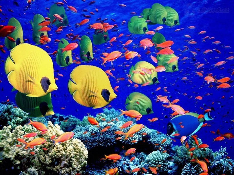 Яркого и хорошего вам дня! животные, интересное, кораллы, красиво, красочно, подводное царство, природа, ярко