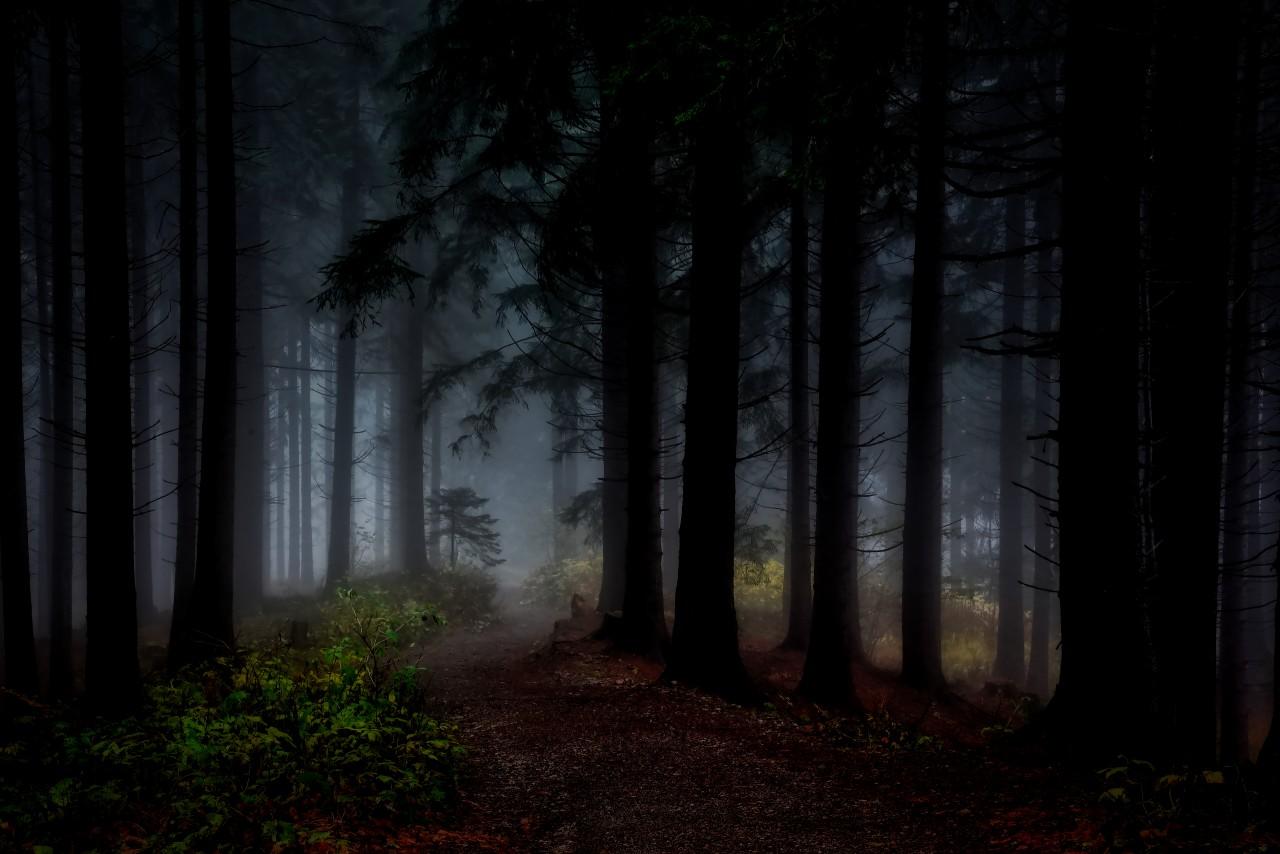 Как заблудившись ночью в лес…