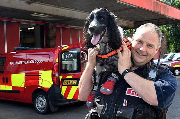 СМИ рассказали о собаке — «секретном оружии» пожарной бригады
