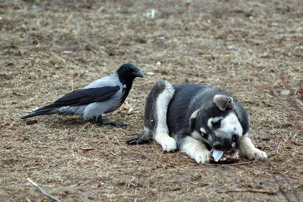 А у Фуни друг — Ворона!!!