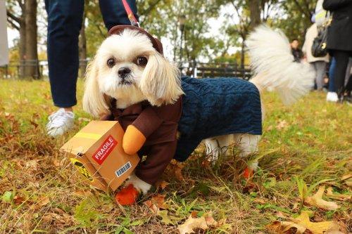 В Нью-Йорке прошёл крупнейший в мире костюмированный парад собак, и его участники достойны вашего внимания!