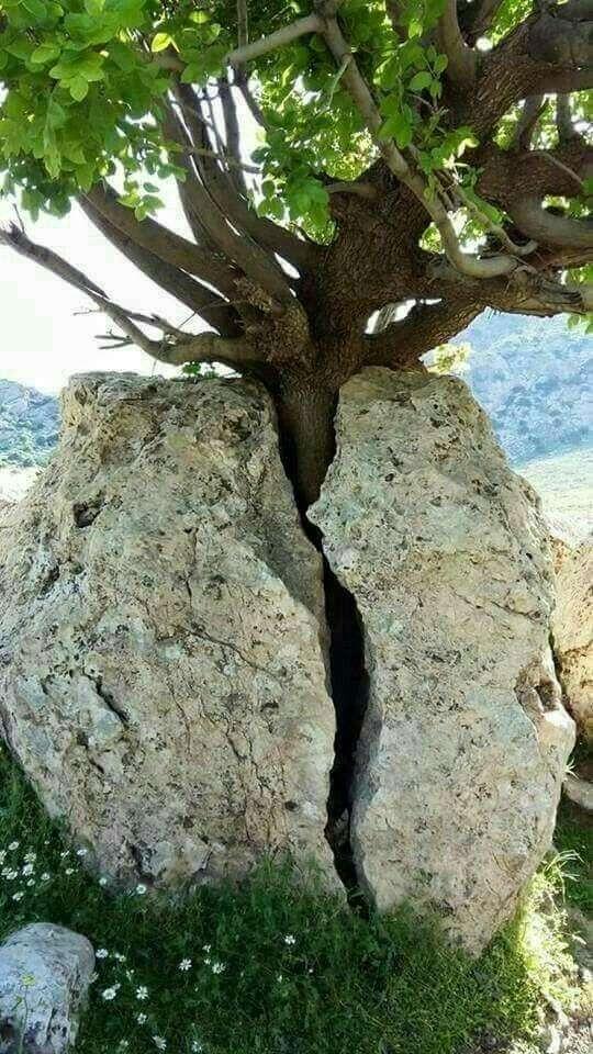 Жажда жизни и великая сила природы