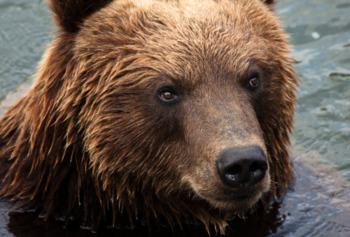 В Карелии медведь откусил руку посетителю кафе