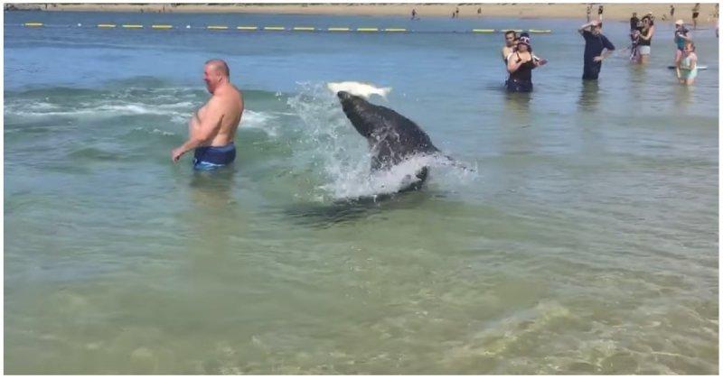 Туристы стали свидетелями охоты морского льва
