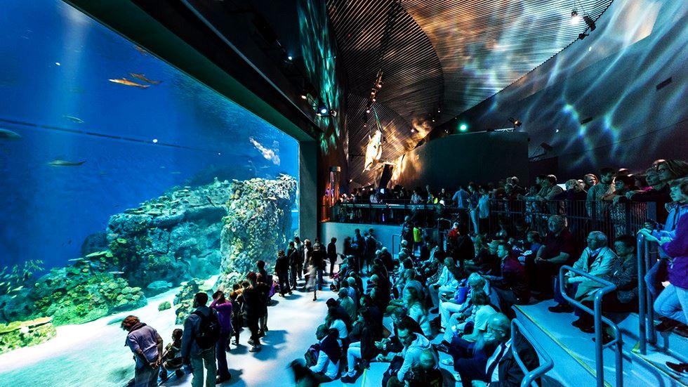 Океанариум Северного Моря Дания. Океаны в миниатюре. Самые известные и крутые океанариумы мира. Фото с сайта NewPix.ru