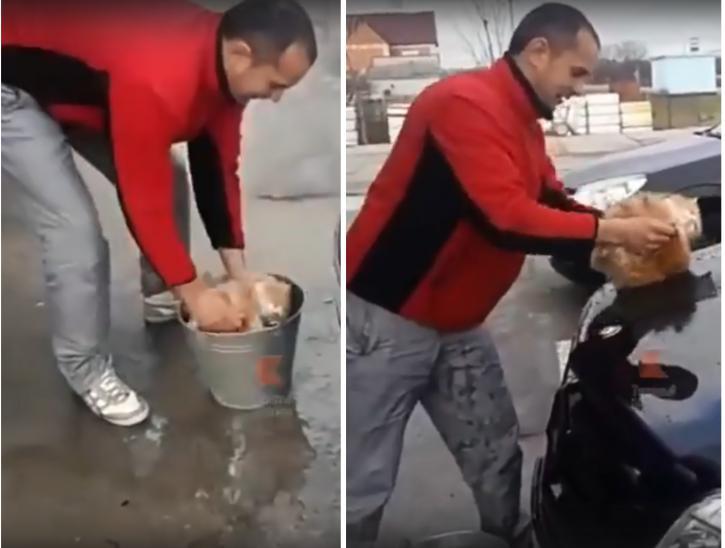 На Кубани автолюбитель помыл и отполировал машину котом