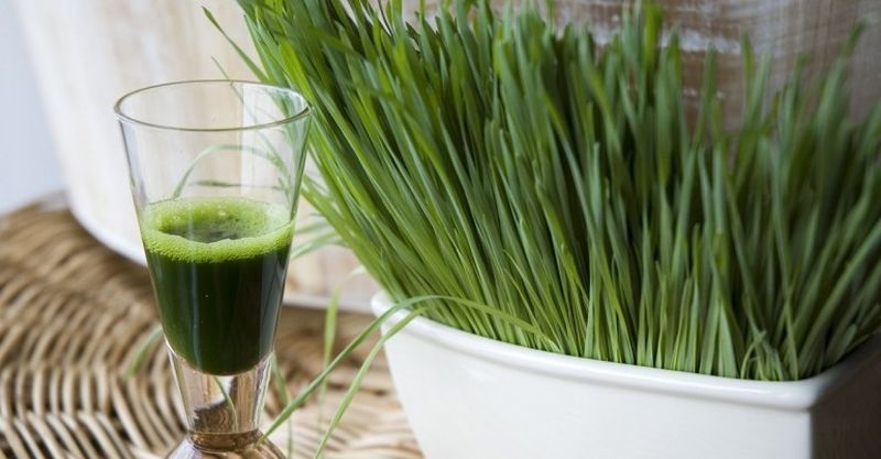 5 преимуществ употребления сока пырея для здоровья