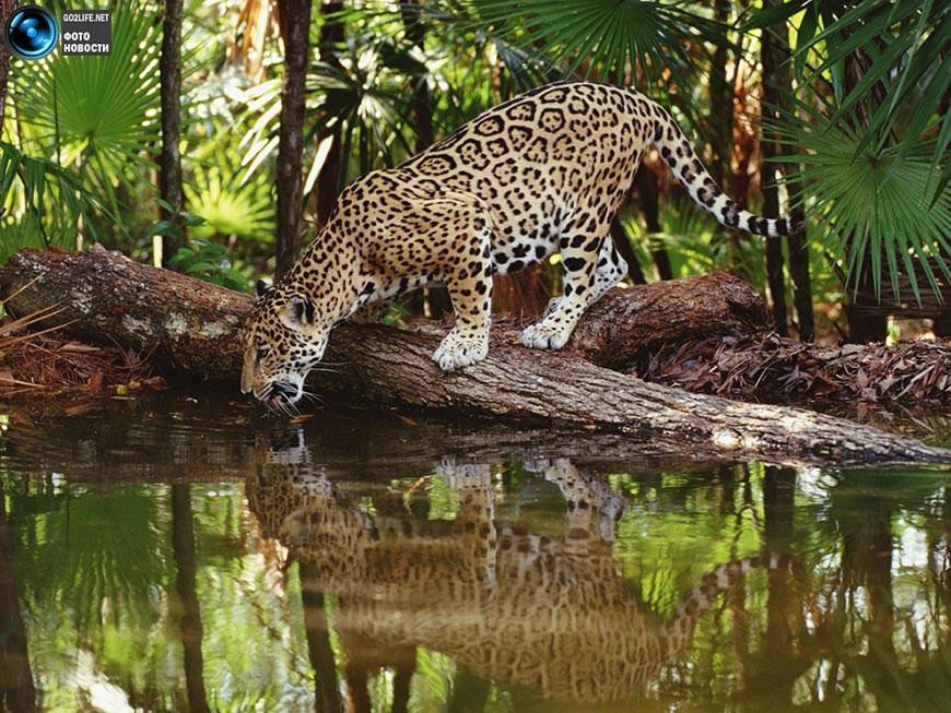 с природой и животными