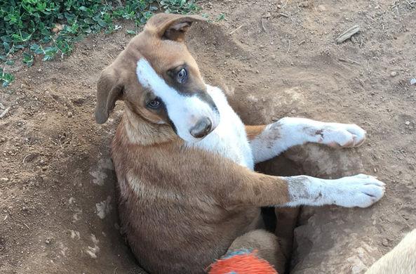 В США нашли самую глупую собаку