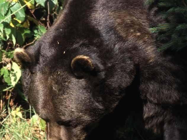 «Весенний танец» медведицы в зоопарке попал на видео