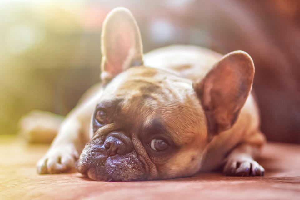 Госдума принимает закон о бережном обращении с животными