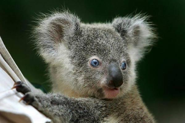 Странность австралийских животных уходит своими корнями далеко в прошлое