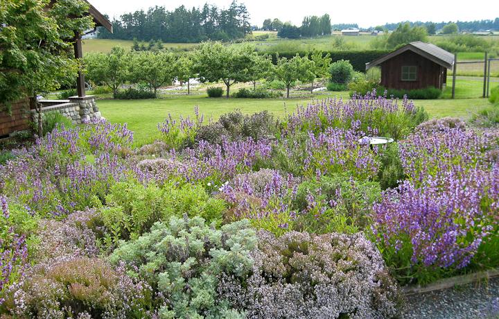 Что посадить на даче: лучшие травы для участка
