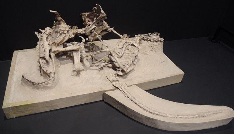 Самые удивительные окаменелости, когда-либо обнаруженные археологами