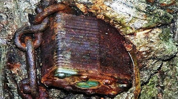 Деревья «съедают» предметы