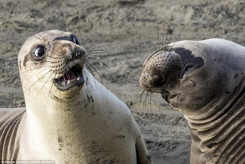 Фото из жизни животных, вызывающие улыбку