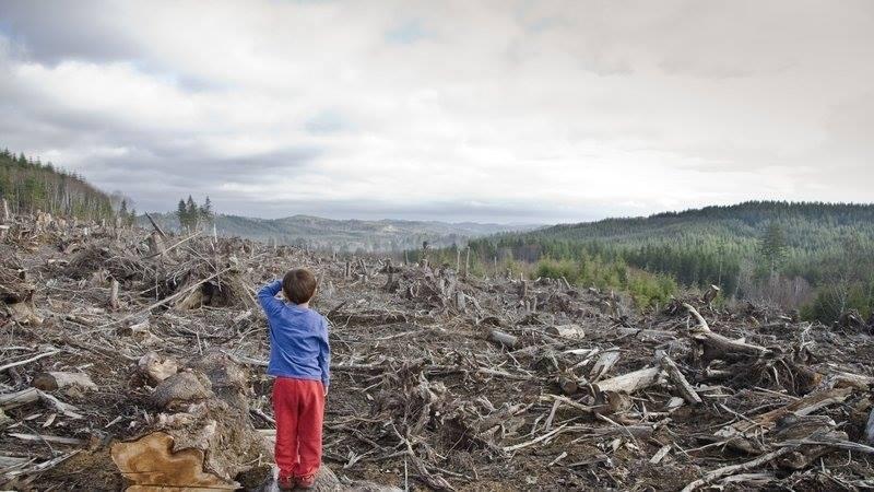 Россия, леса и хищничество в природопользовании