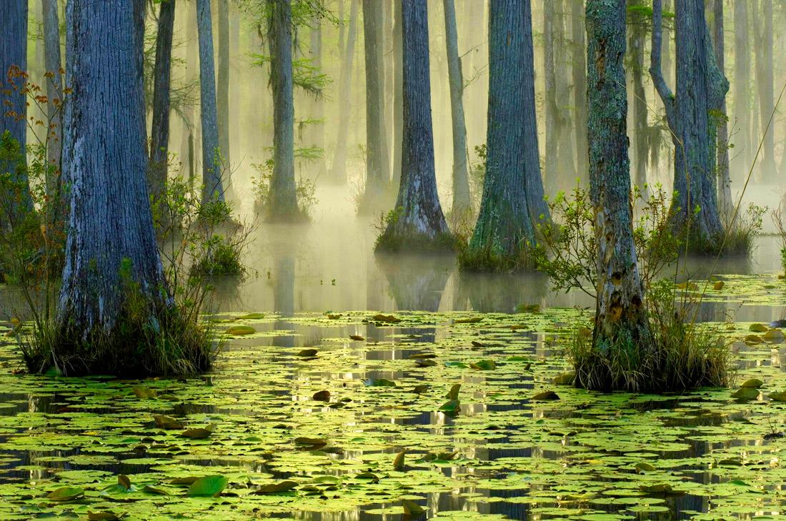 Кипарисовые сады Южной Каролины, США