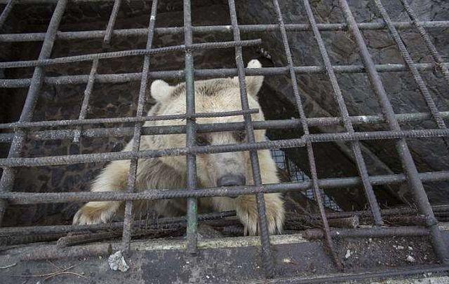 В Армении спасли медведицу, …