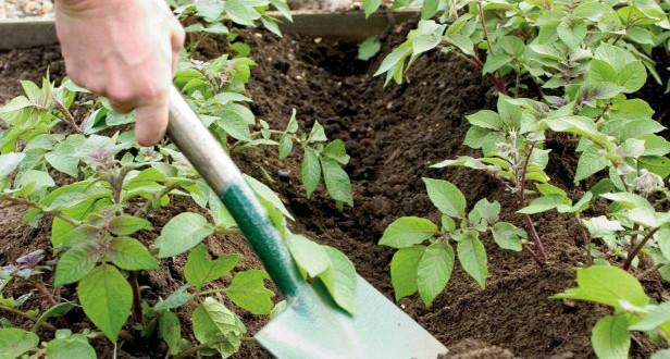 Что после чего сажать или Грамотное планирование посевов