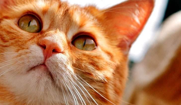 Психологический триллер про кота Антонио, не желавшего меня ни с кем делить