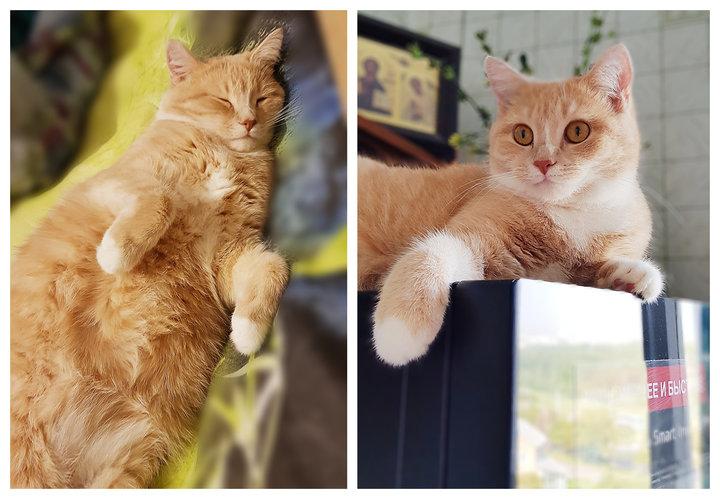 «Не было ни фото котенка, ни подробной информации о нем. Но сердце мое екнуло»