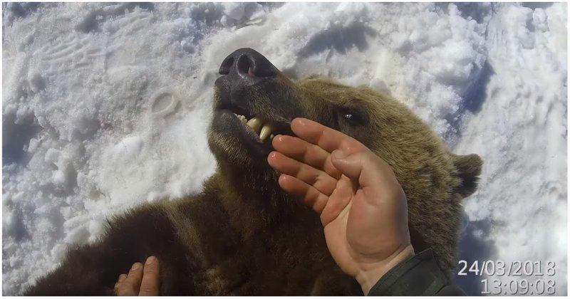 Осмотр зубов у Михаила Потапыча