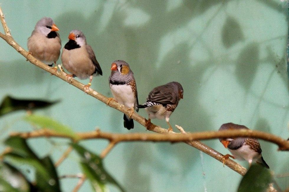 Сад Райских птиц «Миндо» в Санкт-Петербурге