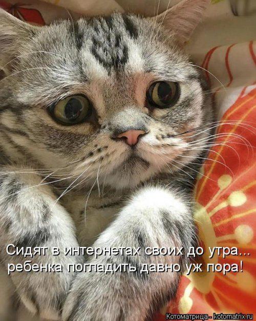 Самые уморительные котоматрицы)