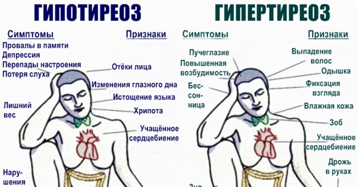 Главные симптомы проблем с щитовидкой, которые должен знать каждый
