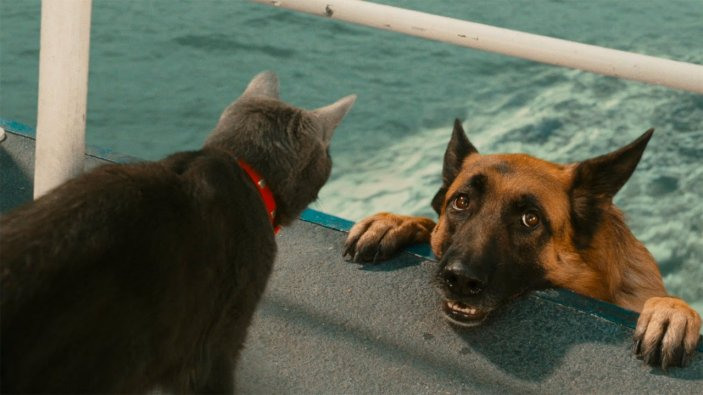 Друзья и враги собаки. Кто они?