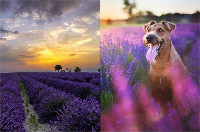 Фиолетовое настроение: 20 сн…