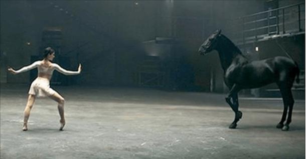 Лошадь, которая танцует не хуже балерины.