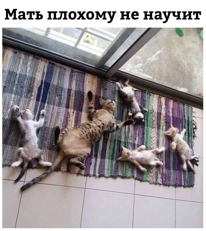 Мать плохому не научит!)))